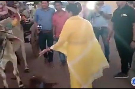 सिंधिया के लिए मैदान मे डटी महारानी अनोखे अंदाज मे कर रही  प्रचार वीडियो देखे !