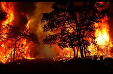 खेत में लगी आग भयकर आग 3लोगो  की मौत,हजारों एकड़ की फसल बर्बाद